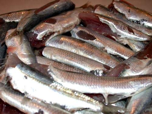 Fresh anchovies